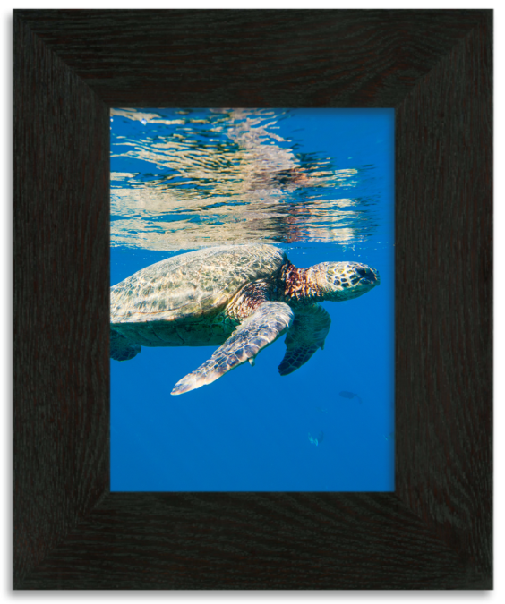 turtle on frame